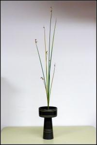 jm reeds