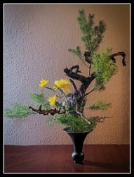 pine-rikka-2-jm